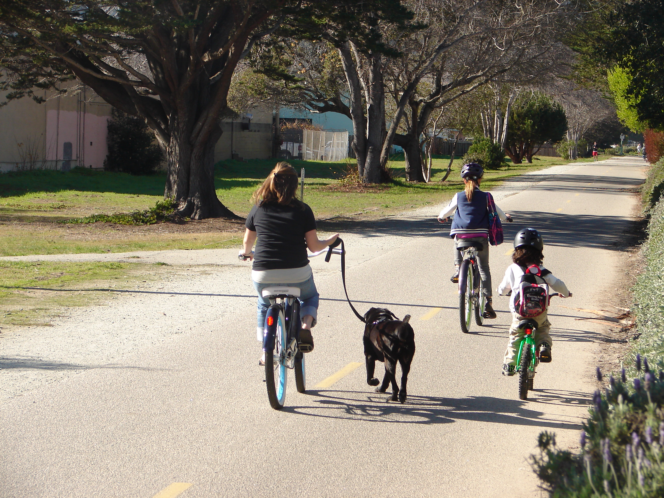 Biking to school with the dog in tow can make it a little tricky to follow ...